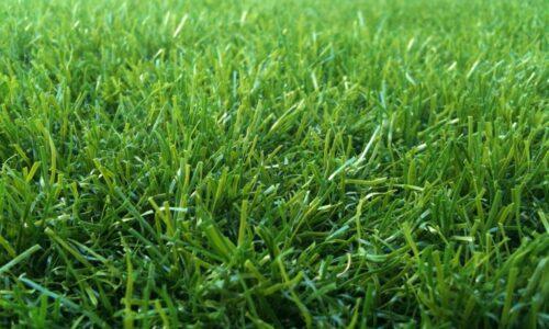 דשא עוז מיקס